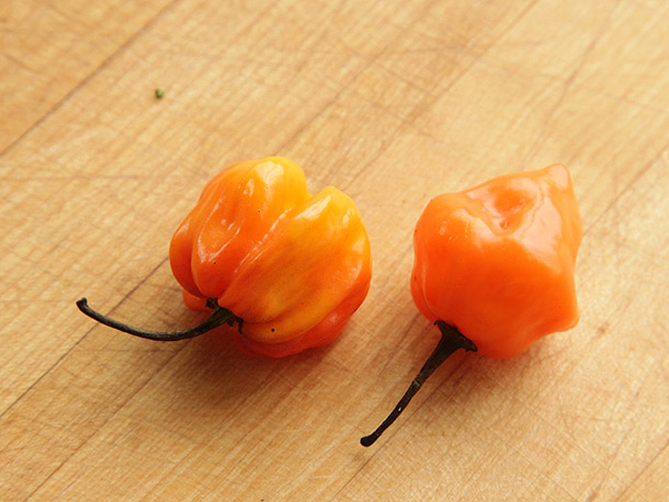orange scotch bonnet habanero